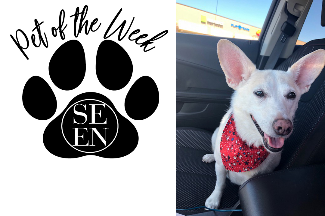 kasey pet of the week