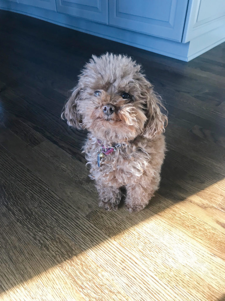 Pet SEEN May 2019