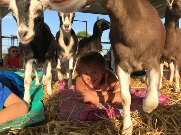 Westview Orchards and Winery Goat Yoga