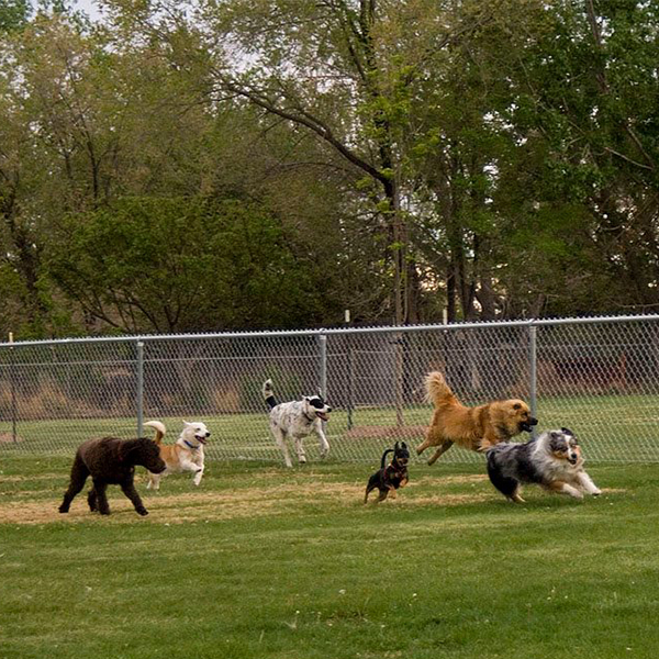 Woofhaven Dog Park